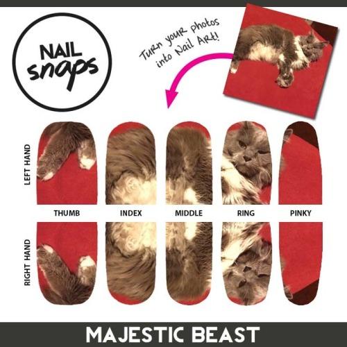 NailSnaps cat